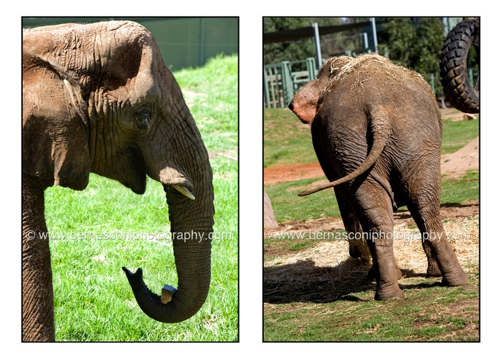 the beautiful #elephant....by Christine Bernasconi www.bernasconiphotography.com