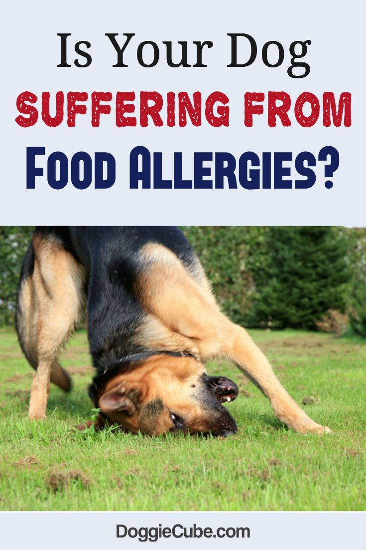 Is Your Dog Suffering From Food Allergies Dog Nutrition Dog