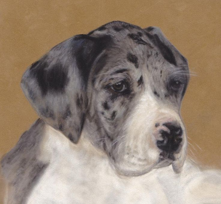 Merle Great Dane Puppies | Merle Great Dane Puppy Pastel - Merle Great Dane Puppy Fine Art Print