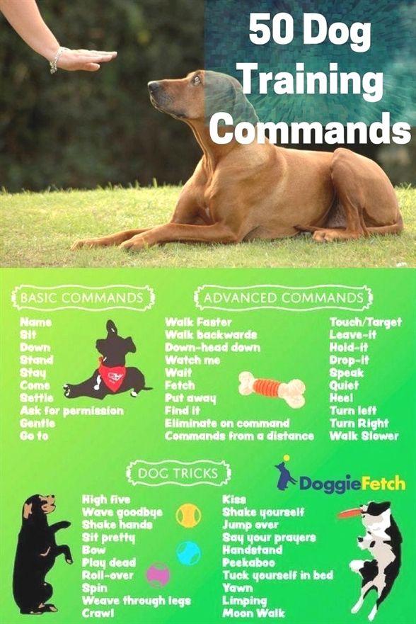 Dog Training In Hindi Service Dog Training Orange County Ca Ez