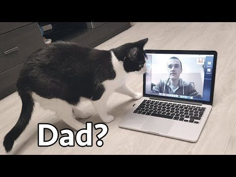 Watch This Cat's Reaction To a Long Distance Video Chat With His Human Daddy