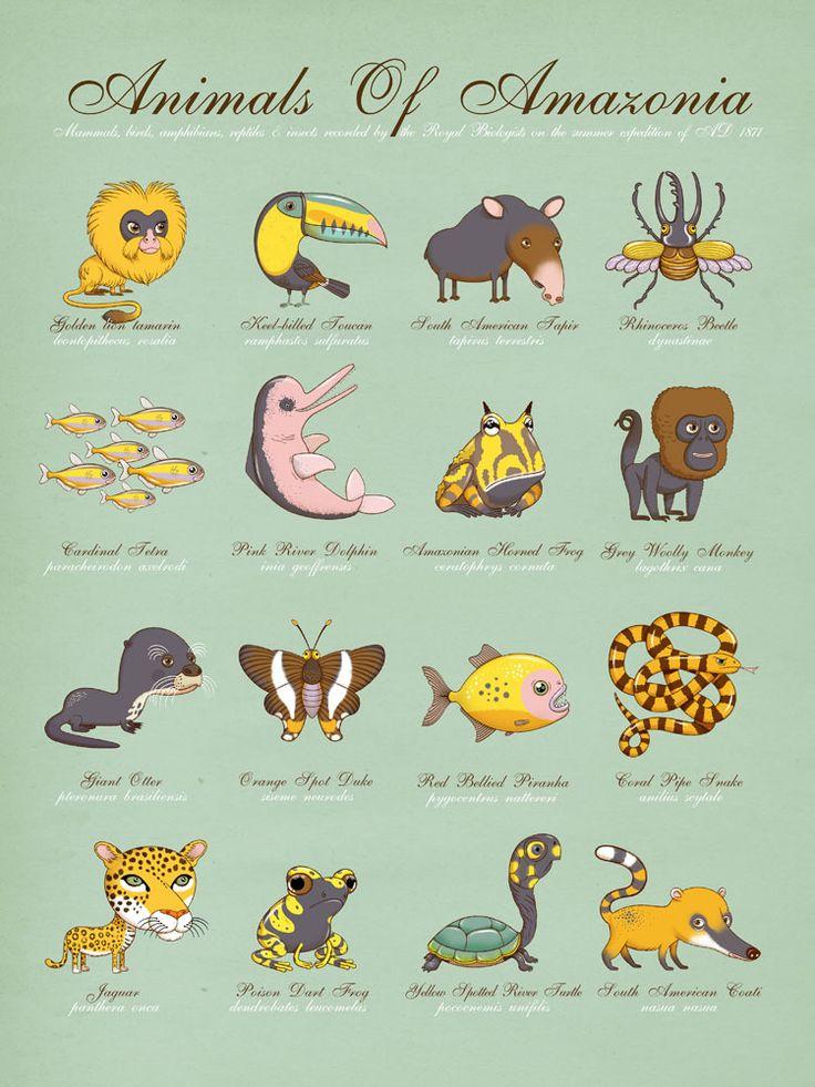 Andy Ward Editions — Animals Of Amazonia #design #illustration