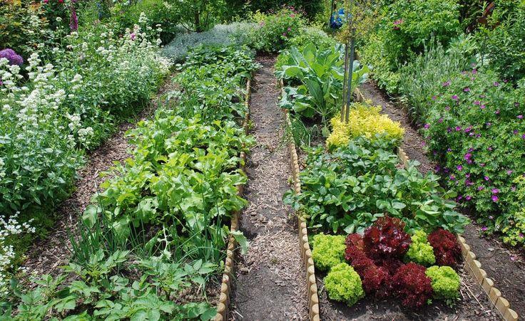Vom Beet direkt in die Küche: Frischer kann Gemüse nicht sein