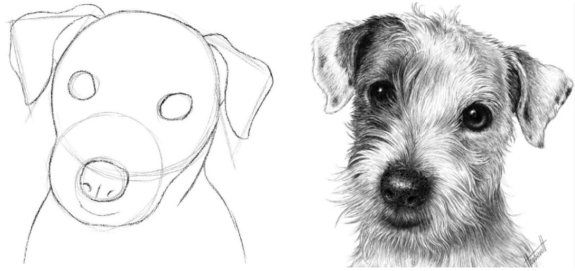 Drawspace.com - Lessons - B08: Seeing Shapes in a Photo of a Dog's Head