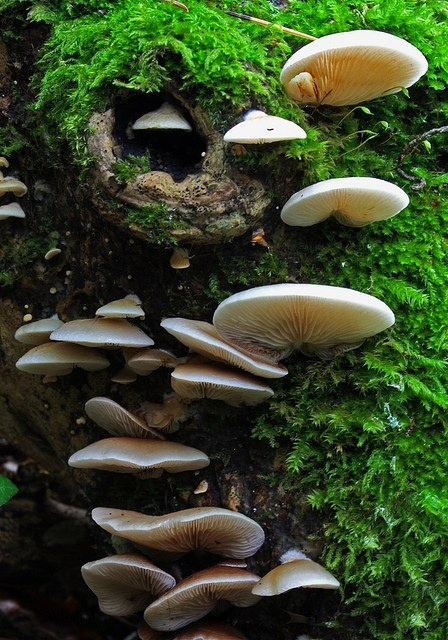 Mushrooms ~ Food & Medicine