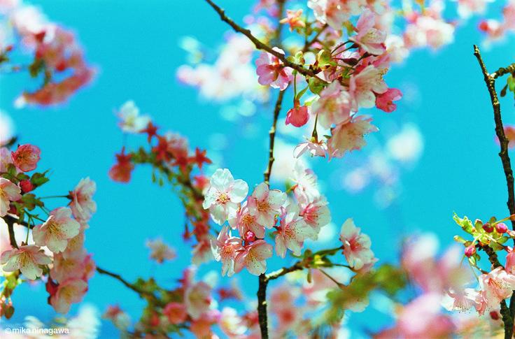 Sakura by Mika Ninagawa