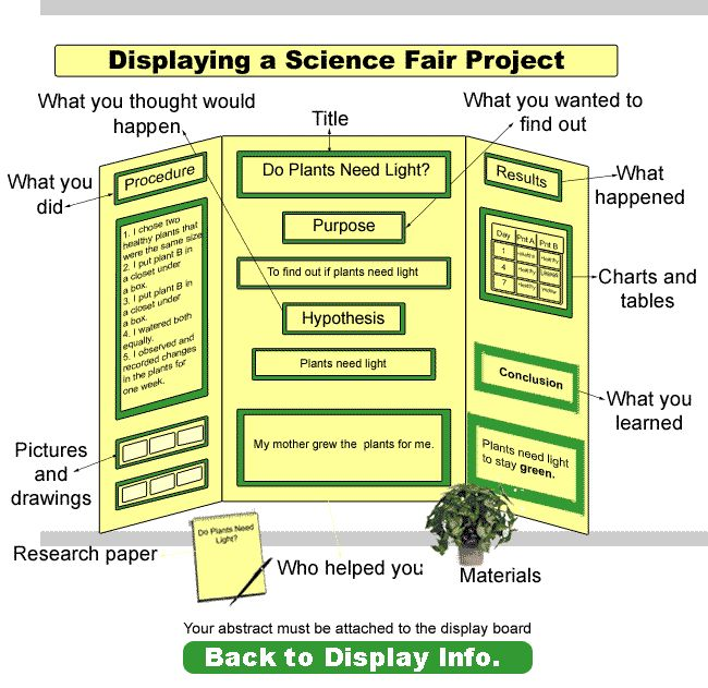 Franklin Montessori School's Science Fair Display Board Example