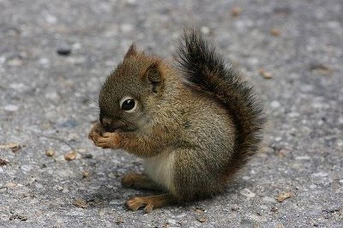 Résultats Google Recherche d'images correspondant à http://ikonal.com/wp-content/uploads/2011/01/bebes-animaux-trop-mignons-101417.jpg
