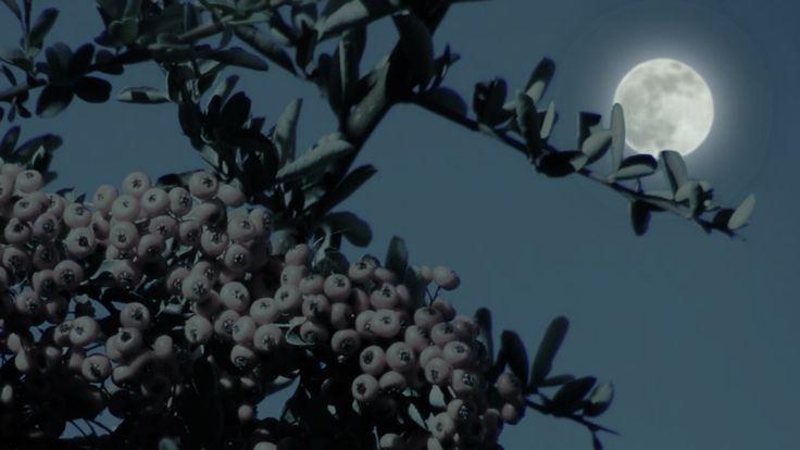 Junes Full Strawberry Moon