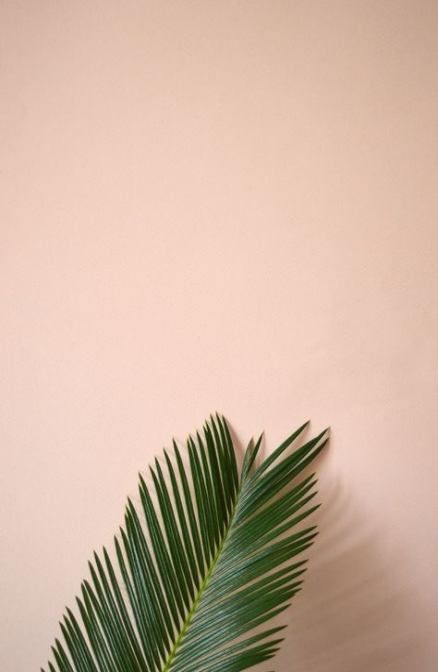42 Trendy Ideas For Plants Wallpaper Iphone Nature Inspiration | Abstract HD Wallpapers 2