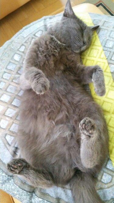 My cat is sleeping .
