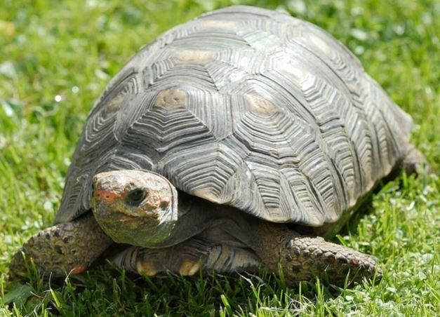 Fire caused by heat lamp in tortoise habitat. 4-16-17