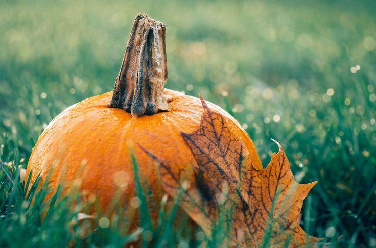 veggielicious-pumpkintreats