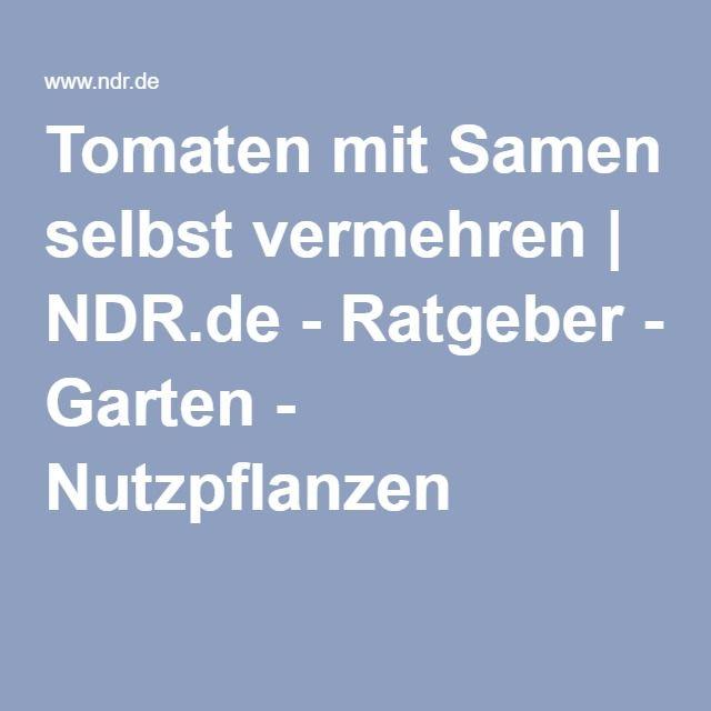 Tomaten mit Samen selbst vermehren | NDR.de - Ratgeber - Garten - Nutzpflanzen