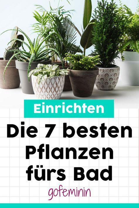 gr ne oase diese 7 pflanzen wachsen am besten im bad haus pinterest. Black Bedroom Furniture Sets. Home Design Ideas