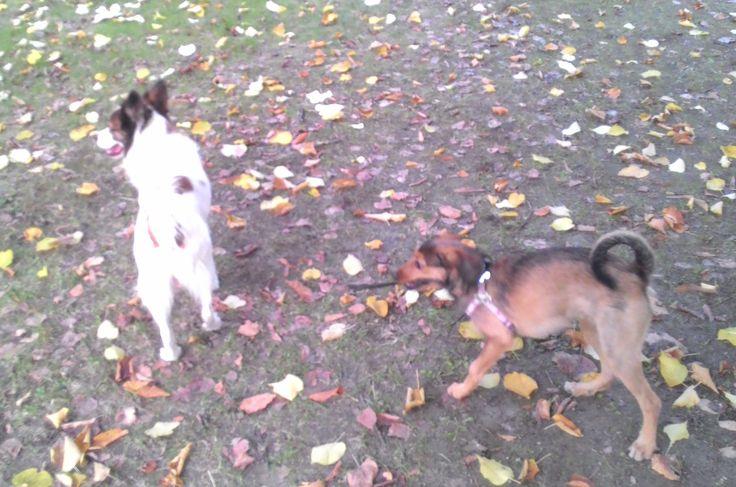 23/10/2015 - Torino con Brigitte