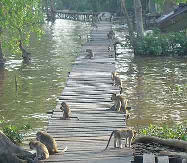 Libur Lebaran, Pengunjung Ekowisata Mangrove Naik 60 Persen