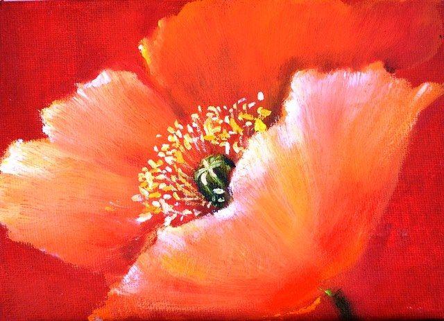An Orange Poppy 17.5 x 13 cm oil on canvas mathildarosslee.wix.com/mathilda-rosslee