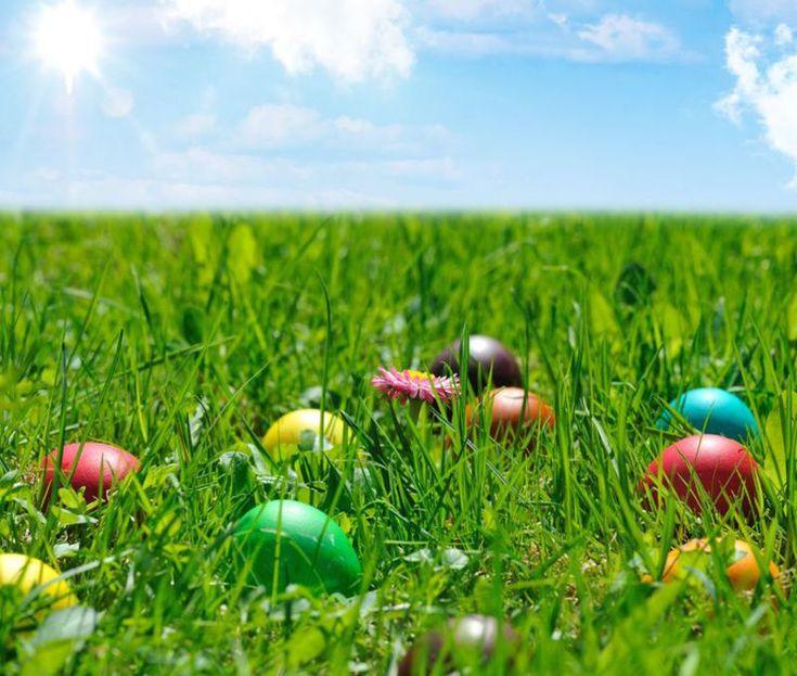 Świąteczne promocje na wyciągnięcie ręki! Przygotuj pyszną Wielkanoc ze znanymi produktami w atrakcyjnych cenach :)