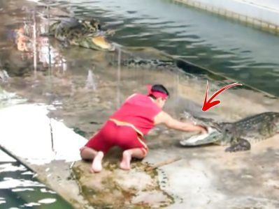 Unexpected accident at crocodile show     Credit: Caters News Agency #news #alternativenews
