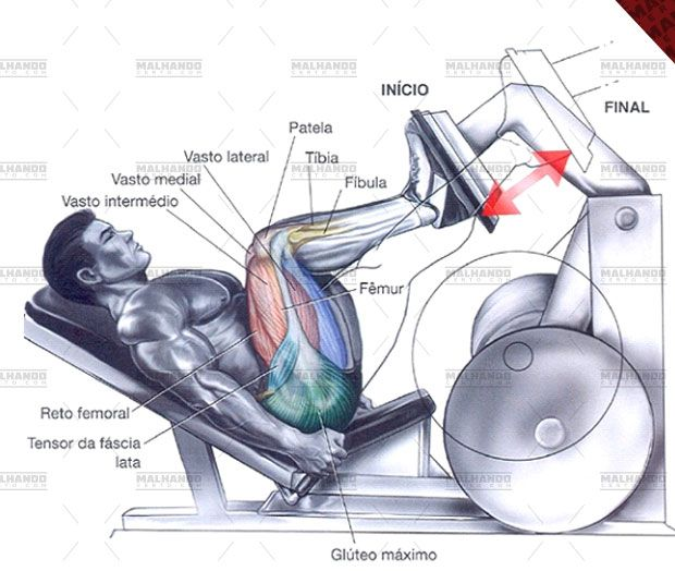 Leg press - Tudo sobre esse exercício para perna! Ilustrações, como executar passo a passo, músculos envolvidos, variações, e mais!
