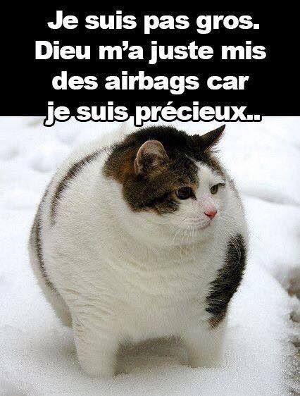 Je suis pas gros , dieu m'a juste mis des airbags car je suis précieux !!! #humour rire #blague