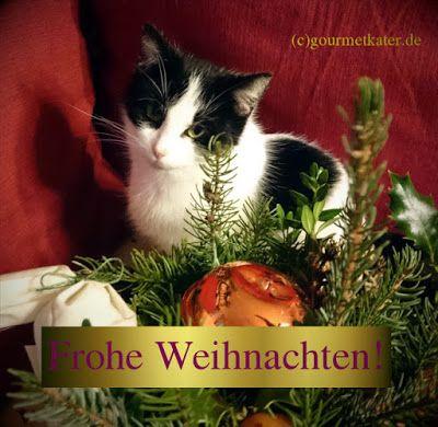 Gourmetkaters Marktplatz: Frohe Feiertage! #x-mas #weihnacht #katze #cat