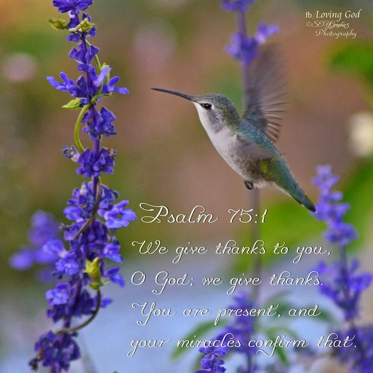 Psalms 75:1-We give thanks to You, O God, we give thanks!  For Your wondrous works declare that Your name is near.  ~~Agrainofmustardseed.com - reaching the world w/the word of God, one SEED at a time! #Agrainofmustardseed #ReadScripturesAloud