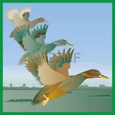 pinterest ucan ördekler ile ilgili görsel sonucu