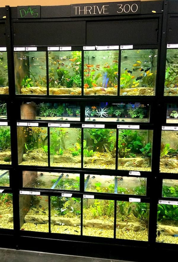Commercial Freshwater Fish Display Racks Thrive Aquarium Fish Store Aquarium Store Fresh Water Fish Tank