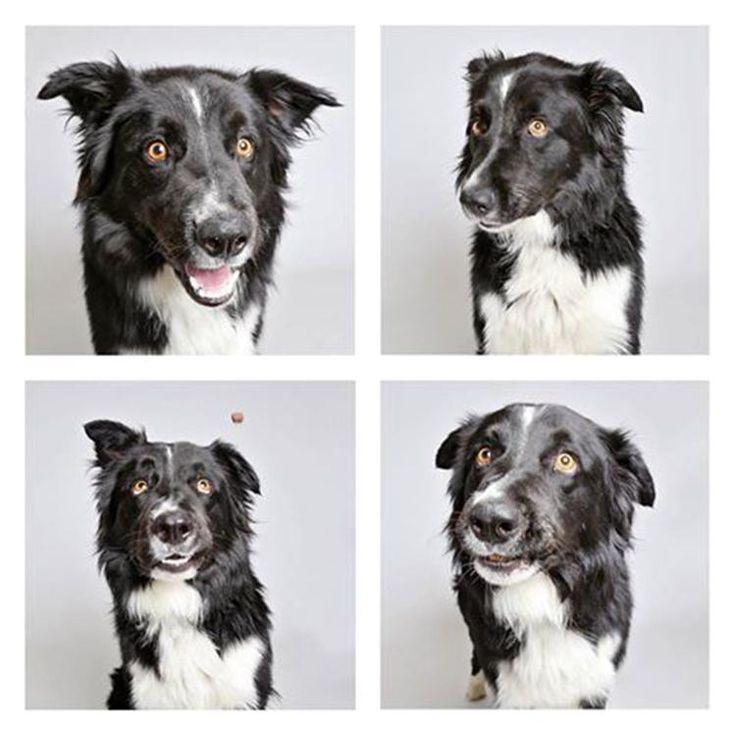 Fotografias de perros en adopción logran encontrarles hogar! : ) - PetDarling