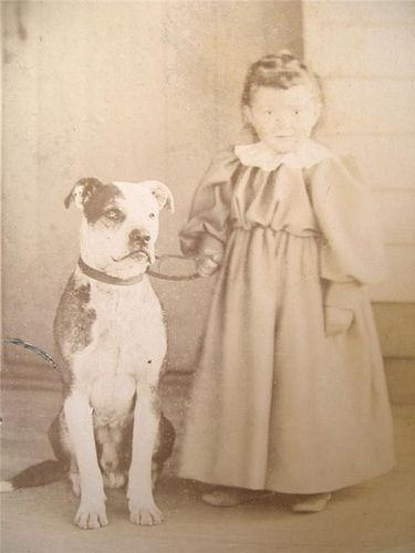"""Old photos of the """"Nanny Dog"""" - Staffordshire Bull Terrier 