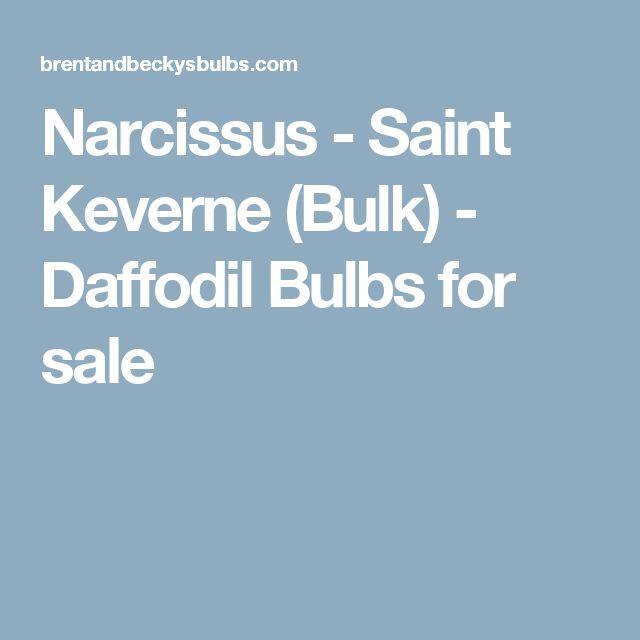 Narcissus - Saint Keverne (Bulk) - Daffodil Bulbs for sale