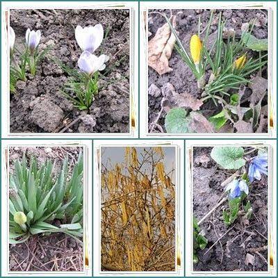 Új cikk: Március köszöntés a kertben, http://kertinfo.hu/marcius-koszontes-a-kertben/, ezekben a témakörökben:  #Díszkert #Fűszer #Kert #Kéziszerszámok #Konyhakert #Konyhakertieszközök #Mag #Márciusi #Tanácsésötlet #tavasz #Tavaszi #tippek #vetés #Vetőmag #Világítás, írta: Ilkertje A cikket itt olvashatod http://kertinfo.hu/marcius-koszontes-a-kertben/