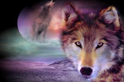 Schöne Wolf HQ Wallpaper