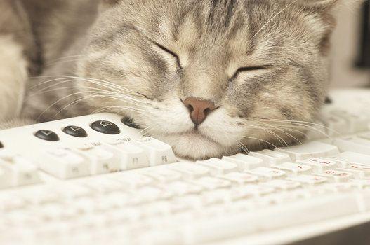 猫がパソコンを使うとこうなる(画像)