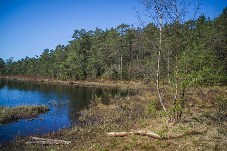Although not on the Bergen Photo Walks itinerary, I thought it would be good to show you some of the nature that is within easy reach of Bergen city centre. Kanadaskogen is a large area of natural …