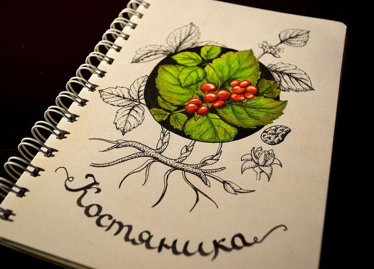 https://flic.kr/p/G91mBi   костяника   Скетч для ботанического марафона