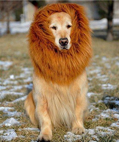 Yo ya tengo a mi Simba en casa...Peluca de León con orejas para perro. ¡ROOOOOARRR!