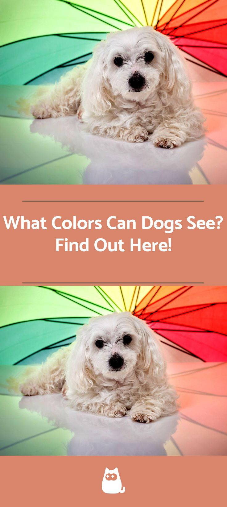 What Colors Can Dogs See Dog Training Tools Facts