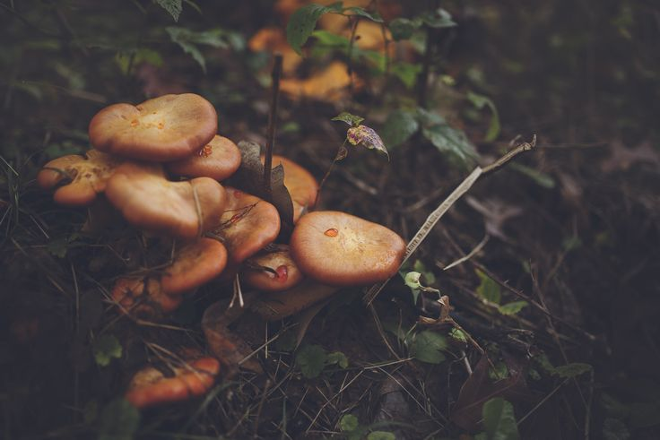 6016x4016 px pictures of mushroom  by Earl Waite for  - pocketfullofgrace.com