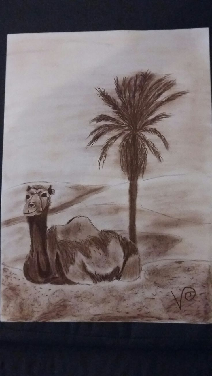 Fusain sépia (Maroc)