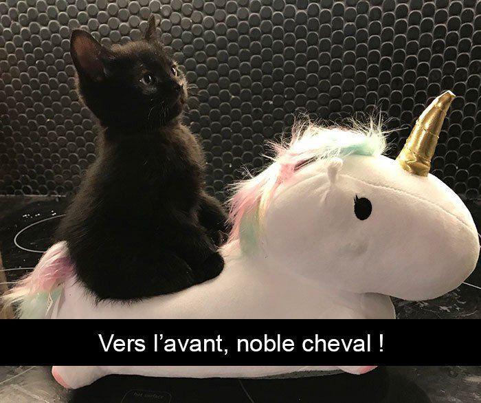 30 images de chats avec sous-titres qui vous feront faire un petit pipi culotte …
