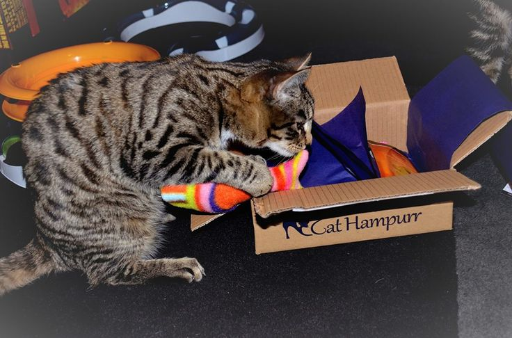 Wyatt Earp's favourite was the catnip fish, which was dragged out immediately! Thank you!