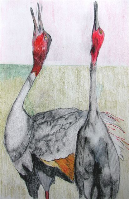 #willpope drawing Cranes