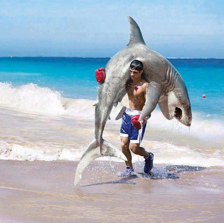 When you hear there's a shark-alert make sure you go out with a pair of good quality boxing gloves .