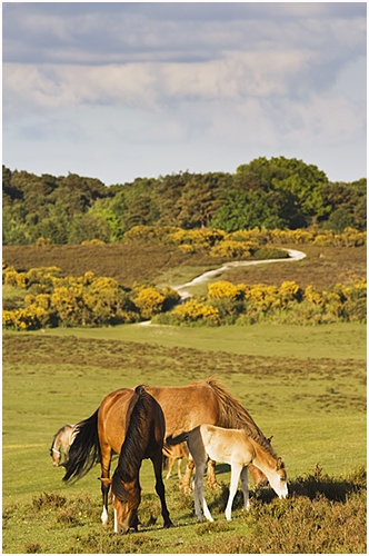 Go and see the ponies and foals this Spring in the New Forest National Park.