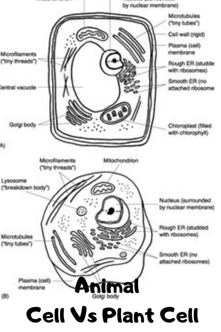 Plants VS Animal Cell Diagram Label black white | Plant ...