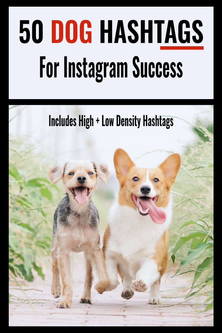 50 dog hashtags for instagram success in 2020 dog