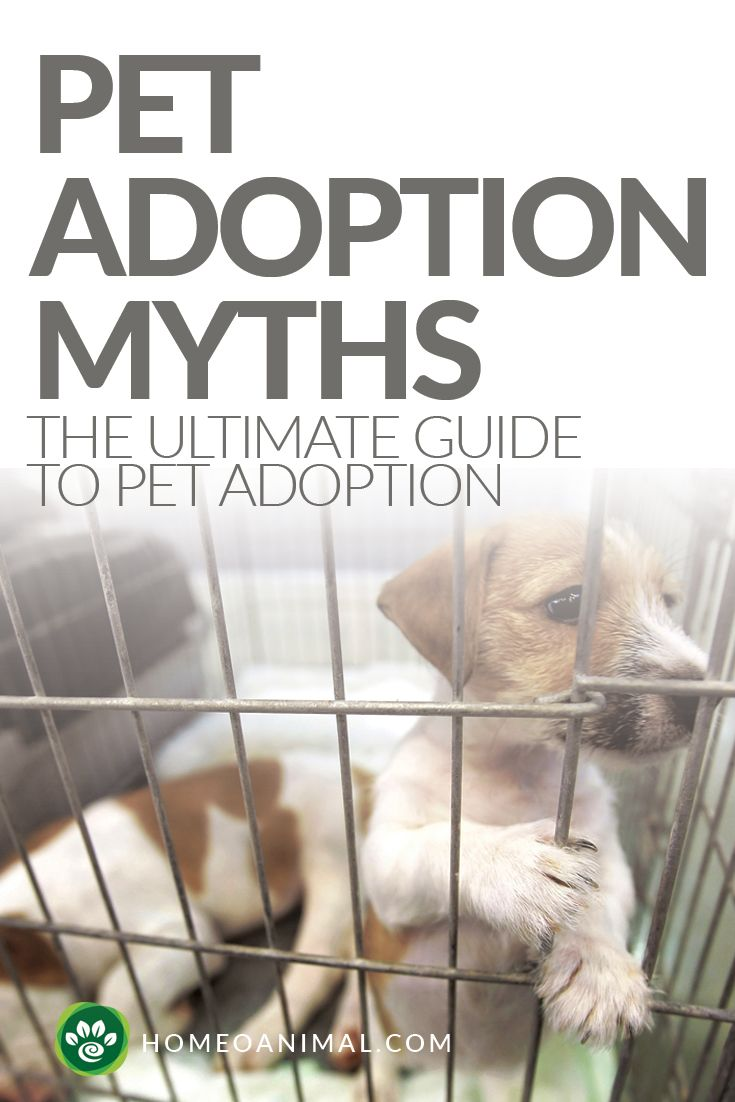 Read what are the pet adoption myths which we should know before adopting pet so that we can not be misguided in any manner